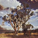 Australian Windswept Tree 01 by f4foto