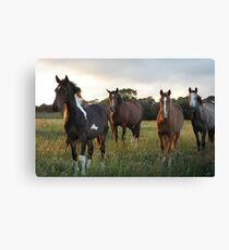 Herd of Horses Canvas Print