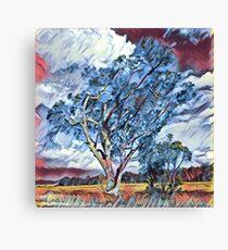 Australian Windswept Tree 02 Canvas Print