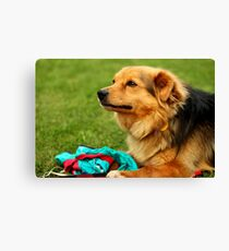 Playful Dog - Nature Photography Canvas Print