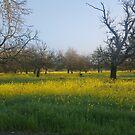 Mustard Field by PockySamurai