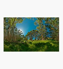 Looking out from Lachlan Swamp Photographic Print