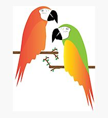 Red and Green Parrot on Tree Photographic Print