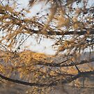 Autumn in Inner Mongolia by emmawind