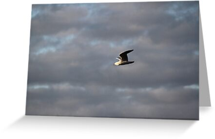 Gull by Ongoingline