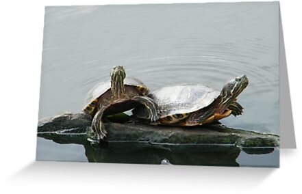 Turtles in Central Park, New York  by lenspiro