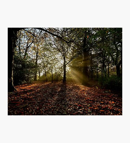 Preston Park, Misty Morning Photographic Print