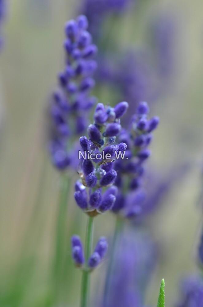 Lavender dreams by Nicole W.
