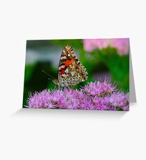 New Butterfly Greeting Card