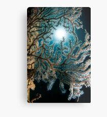 Anthogorgia caerulea coral. Photographed in the Red Sea, Israel  Metal Print