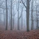 The Silence of the Wood by Ursula Rodgers Photography
