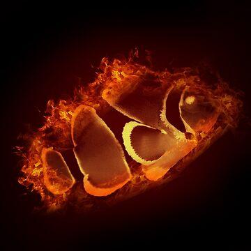 fire clownfish by mehimsam