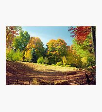 Autumn Foliage, New England Photographic Print