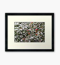 apples  under the snow Framed Print