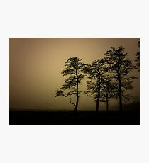 The dark trees at the forest edge. Sepia dark background Photographic Print