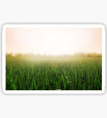 Grass background. Sunny and peaceful landscape of grass blades and blurred pink background Sticker