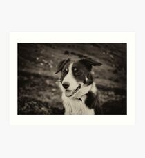 The world's friendliest sheep dog Art Print