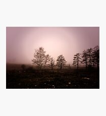 The dark trees at the forest edge. Pink dark background: forest in the mist Photographic Print