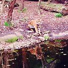 Tiger by Angela Lo Rosso