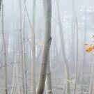 Last Autumn Branch by Svetlana Sewell