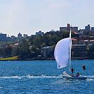 Sailing across Sydney Habour by Stephen Mitchell