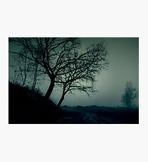 The dark trees at the forest edge and clearing. Blue dark background: forest in the mist Photographic Print