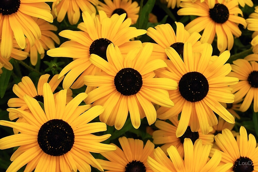 Yellow Daisies - From My Mother's Secret Garden by LouD