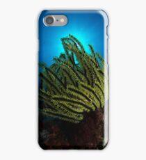 Crinoid Eclipse iPhone Case/Skin