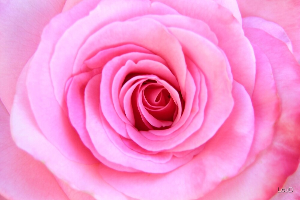 Fabulous Pink - from My Mother's Secret Garden by LouD