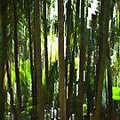 Palmetum #01 by LouD