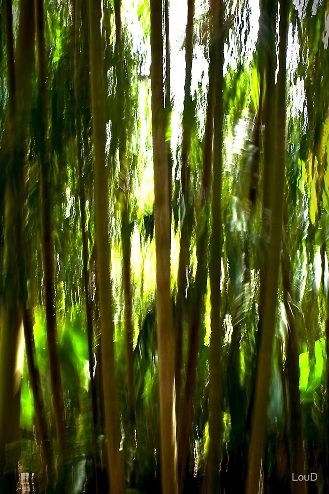Palmetum #02 by LouD