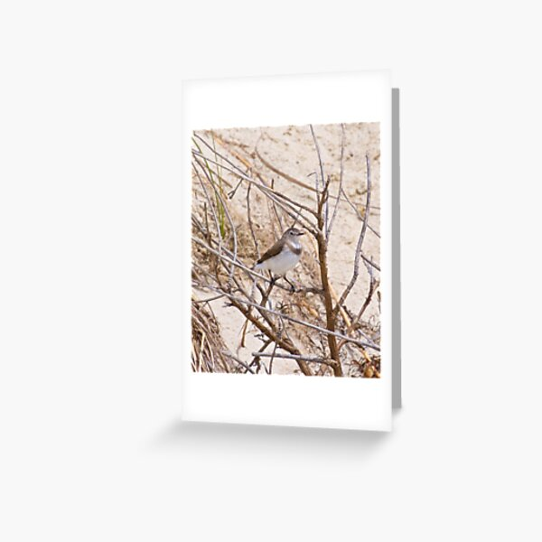 CHAT ~ White-fronted Chat Xc3eRkUJ by David Irwin Greeting Card