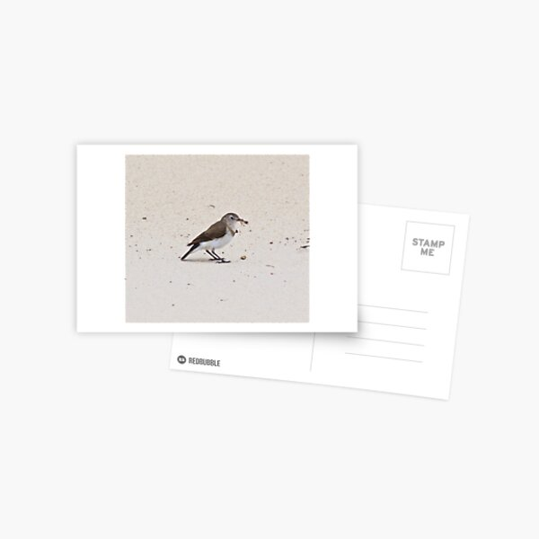 CHAT ~ White-fronted Chat dXNSzWtK by David Irwin Postcard