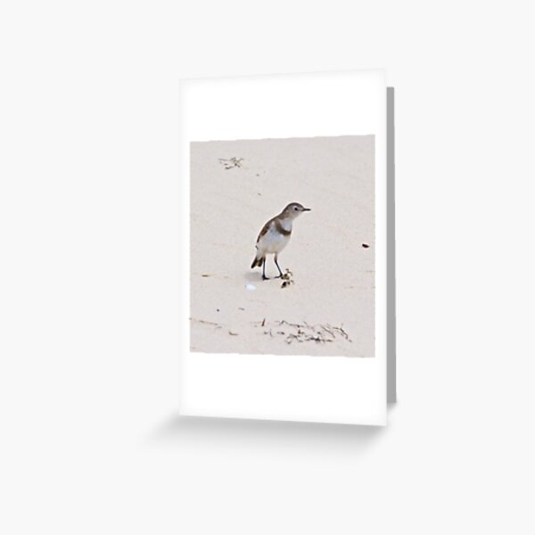 CHAT ~ White-fronted Chat YTMYyu7c by David Irwin Greeting Card