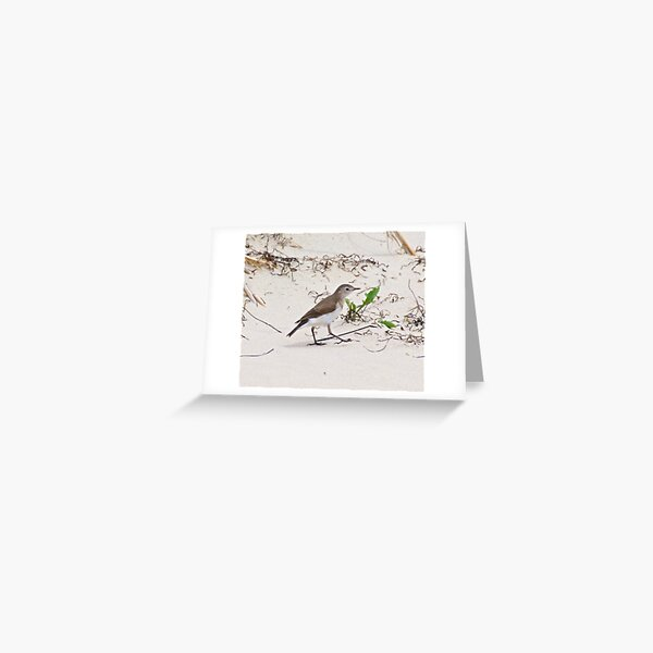 CHAT ~ White-fronted Chat yvrjxx2H by David Irwin Greeting Card