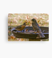 Squabble at the Water Hole Canvas Print