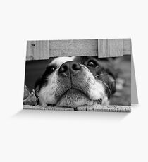 chien dog Greeting Card