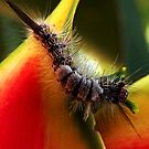 Caterpillar by LouD