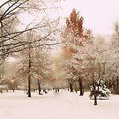 Winter Park by Jessica Jenney