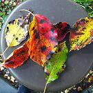 A Leaf Arrangement by PockySamurai