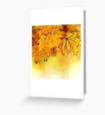Fall maple leaves 2 Greeting Card