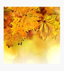 Fall maple leaves 2 Photographic Print