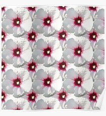 Natural Flowers Series - White and Violet Hisbiscus Poster