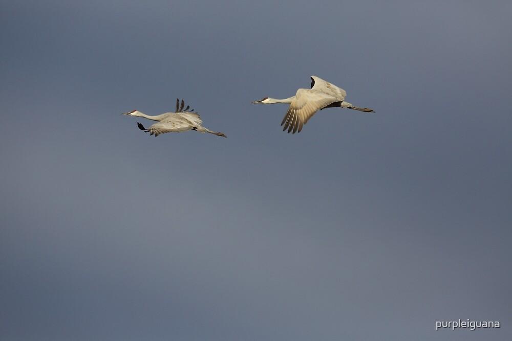 Two in flight against gray sky by purpleiguana