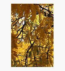 Close up of yellow trees Photographic Print