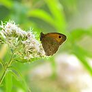 Butterfly on flower by Sparowsong
