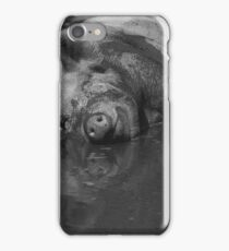 Happy pig - photograph iPhone Case/Skin