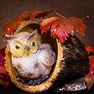Autumnal Owl still life  by Martina Fagan