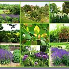 Hyde Hall in Summer - A Rural Essex Collage  von BlueMoonRose