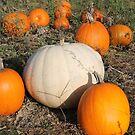 Fall pumpkins by Melissa Delaney